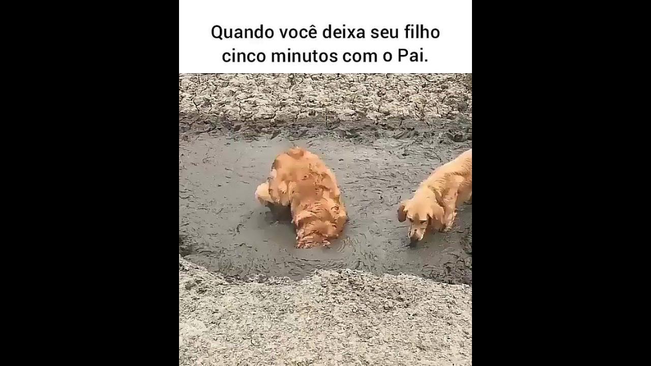Cachorro fazendo a festa na lama