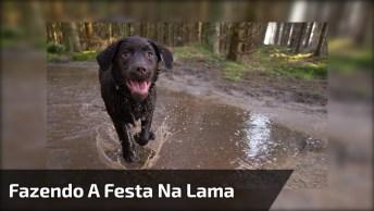Cachorro Fazendo A Festa Na Lama, Só Quem Já Teve Um Cão Sabe Como É, Hahaha!