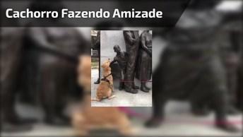 Cachorro Fazendo Amizade Com Estátuas, Que Coisa Mais Fofa!