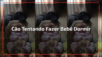 Cachorro Fazendo Bebê Dormir, Ou Pelo Menos Tentando Né Hahaha!