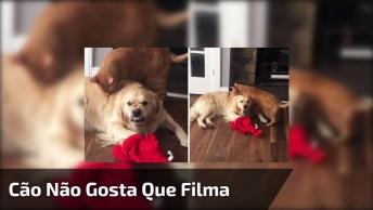 Cachorro Fazendo Cara Brava Por Estarem Filmando Ele Com Um Gato Hahaha!