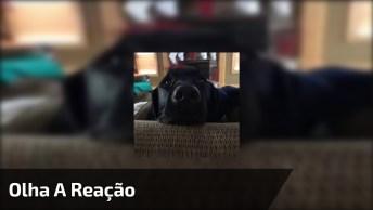 Cachorro Fazendo Careta Quando Sua Dona Pergunta Se Ele Quer Um Banho, Kkk!