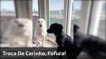 Cachorro Fazendo Carinho No Outro E Abrasando, Eles São Puro Amor!