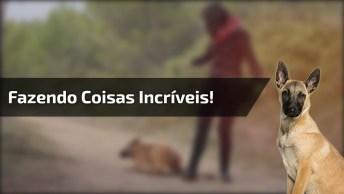 Cachorro Fazendo Coisas Impressionantes, Veja O Vídeo E Surpreenda-Se!