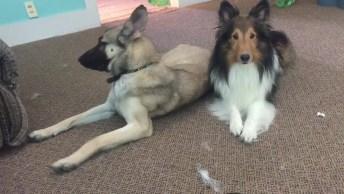 Cachorro Fazendo De Tudo Para Chamar A Tenção De Sua Amiga, Olha Só Que Fofo!
