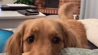 Cachorro Fazendo Dengo Para Dona, Olha Só Esta Carinha Linda!