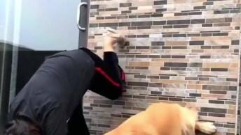 Cachorro Fazendo Exercícios Com A Mamãe Humana, Parceria Mais Que Perfeita!