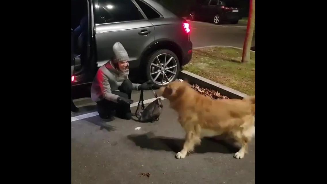 Cachorro fazendo festa com a chegada da mamãe humana