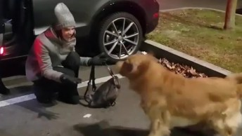 Cachorro Fazendo Festa Com A Chegada Da Mamãe Humana, Veja Que Fofura!