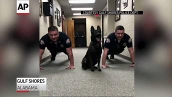 Cachorro Fazendo Flexões Com Soldados, Veja Que Coisa Mais Linda!