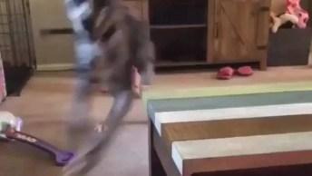 Cachorro Fazendo Gracinha Para Bebê Dar Risada, Olha Só Quanto Amor!
