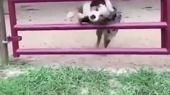 Cachorro Fazendo Pulo Sensacional, Confira E Compartilhe!