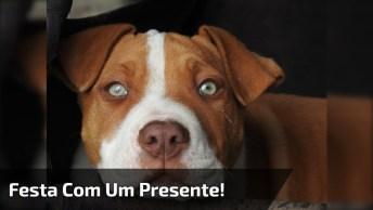 Cachorro Fazendo Uma Festa Com Um Presente, Um Osso Super Saboroso!