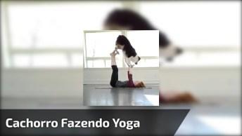 Cachorro Fazendo Yoga Com Sua Dona, Olha Só Como Ele É Esperto!