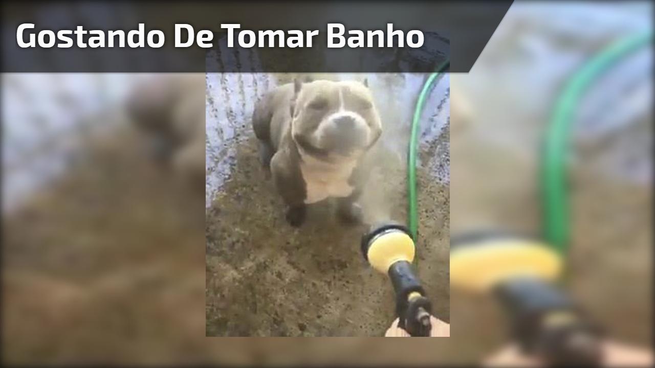 Cachorro feliz ao tomar banho de mangueira, que delicia!