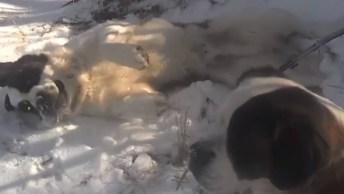 Cachorro Feliz Brincando Na Neve, Veja A Alegria Do Bichinho!