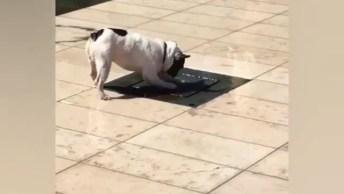 Cachorro Feliz Com Uma Fonte De Água, Uma Felicidade Que Não Se Compara!