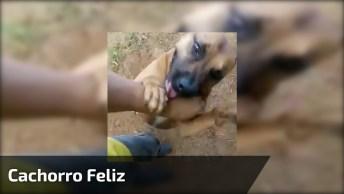 Cachorro Feliz, Ele Fica Até Cansado De Tando Pular De Um Lado Para O Outro!
