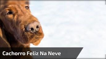 Cachorro Feliz Na Neve, Esse Me Representa Ama O Inverno, Kkk!
