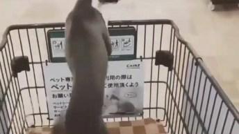 Cachorro Feliz Por Que Chegou No Supermercado, Que Fofura!