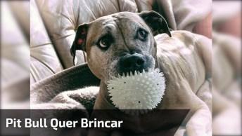 Cachorro Fica Apertando Brinquedo Com A Boca Só Para Ter Atenção!