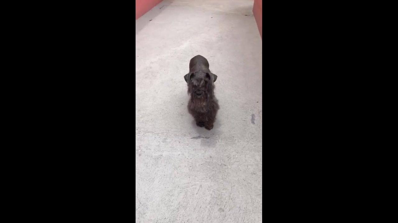 Cachorro fica cismado com câmera de filmagem