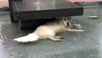 Cachorro Fica Com Corpo Coberto Pela Água E Não Sai Do Lugar De Preguiça!