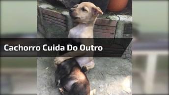 Cachorro Fica Do Lado De Outro Cachorro, Enquanto Ele Esta Tomando Soro!