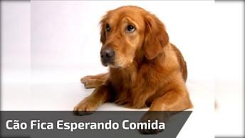 Cachorro Fica Esperando Papai Tratar Dele, Que Fofura De Cão!
