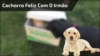 Cachorro Fica Feliz Ao Receber Novo Membro Na Família, Que Lindo!