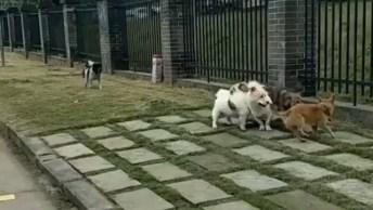 Cachorro Fica Fora Da Festa, Deu Um Dozinho Dele Né, Confira!
