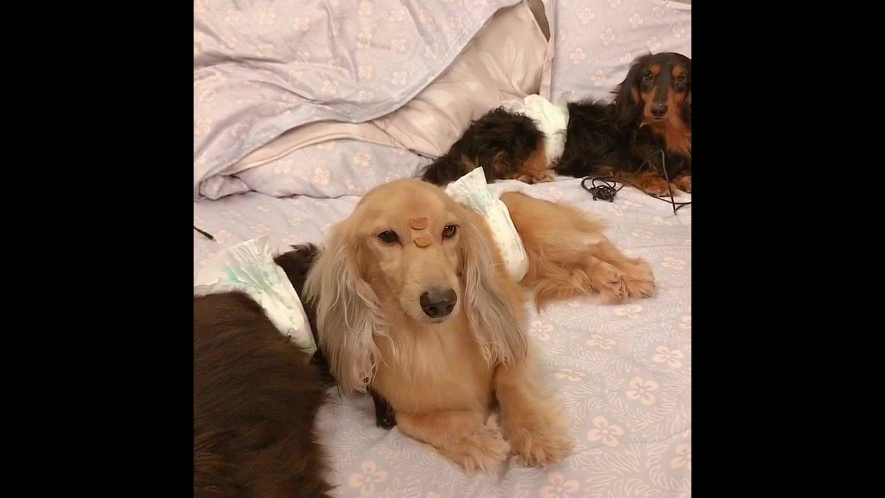 Cachorro fica parado com humano colocando petisco em seu focinho