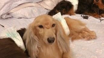 Cachorro Fica Parado Com Humano Colocando Petisco Em Seu Focinho!