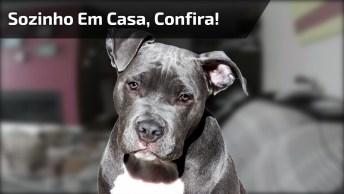 Cachorro Fica Sozinho Em Casa E Pega Sapato De Dono Para Sentir Seu Cheiro!
