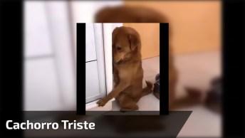 Cachorro Fica Triste Por Estar Com A Panela Vazia, Que Fofura!