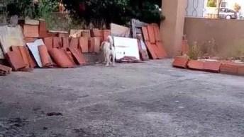Cachorro Ficando Em Pé Para Escutar O Que Esta Acontecendo Na Rua Hahaha!