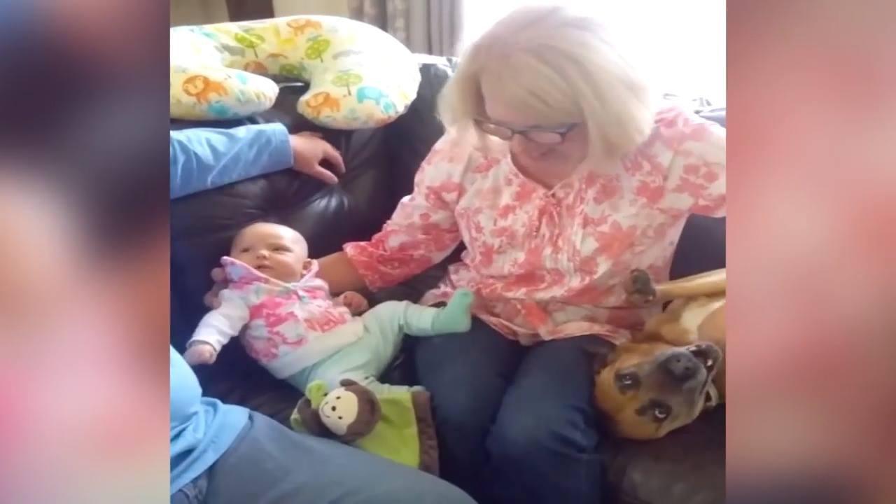 """Cachorro """"finge"""" que é um bebê para ganhar carinho e atenção!"""