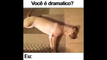 Cachorro Fingindo Que Tomou Um Tiro, Será Que Ele É Dramático?
