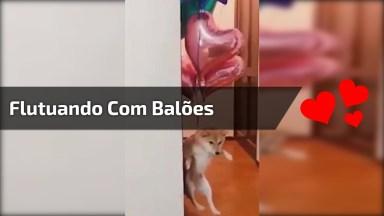Cachorro Flutuando Com Balões, Uma Fofura De Vídeo Para Compartilhar!
