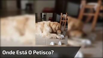 Cachorro Fofo Brincando De Achar Onde Esta O Petisco Escondido!