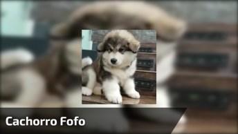 Cachorro Fofo Para Compartilhar No Facebook, Você Vai Amar Ele!