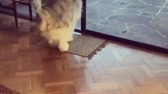 Cachorro Fofo Passando Por Fresta Na Porta, Que Fofura De Cachorro!
