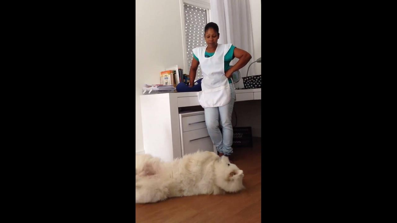 Cachorro fofo que se parece com um urso polar