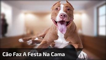Cachorro Foi Flagrado Por Câmera Escondida Fazendo A Festa Na Cama De Seus Donos