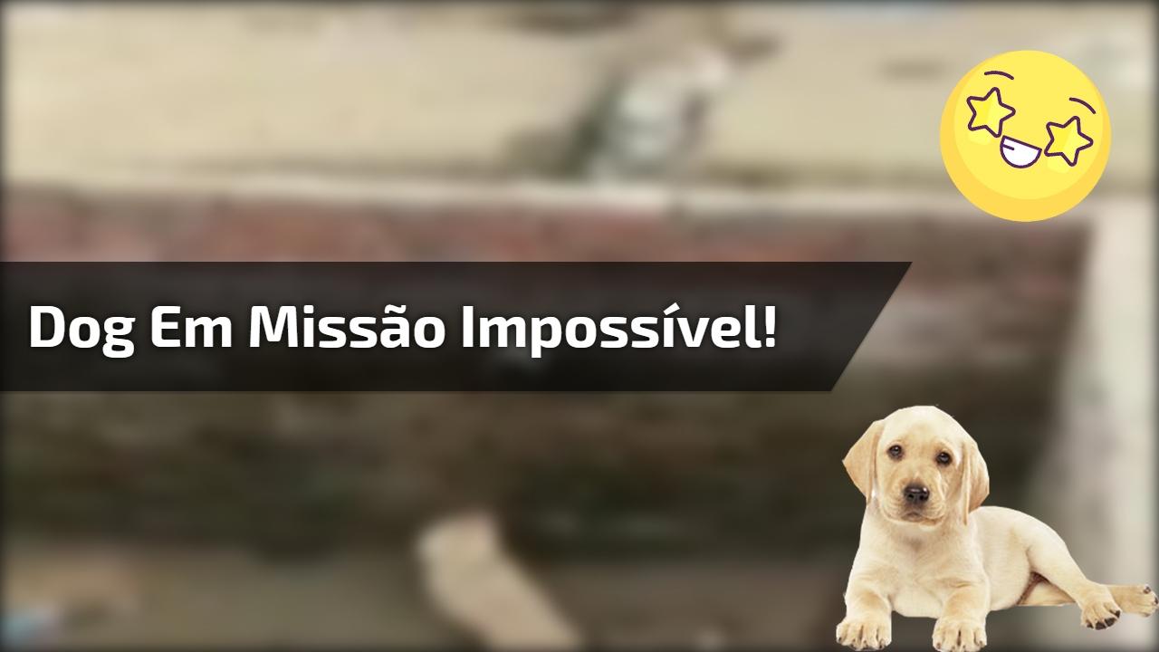 Dog em missão impossível!