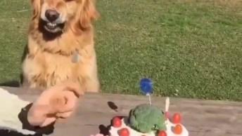 Cachorro Ganha Bolo De Aniversário E Não Deixa Ninguém Mexer Hahaha!