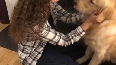 Cachorro Ganhando Carinho Na Cara E No Pescoço, Não Quer Mais Nada!