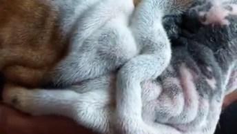 Cachorro Ganhando Carinho No Rosto, Ele Fica Bem A Vontade!