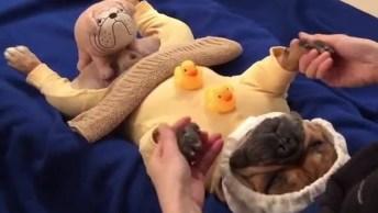 Cachorro Ganhando Massagem Como Se Estivesse Em Um Spa, Que Fofura!