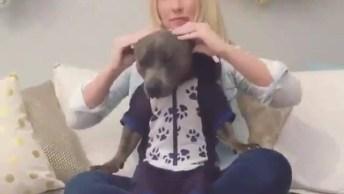Cachorro Ganhando Massagem Sentado No Colo Da Mamãe, Confira!